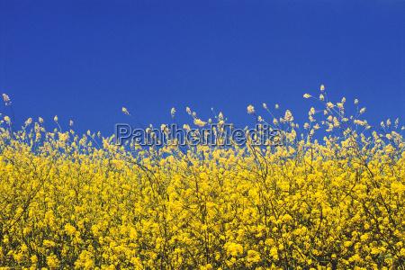 blume pflanze gewaechs flora usa horizontal