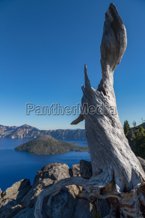 lone tree trunk over crater lake