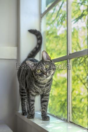 fenster luke glasfenster fensterscheibe tiere portrait